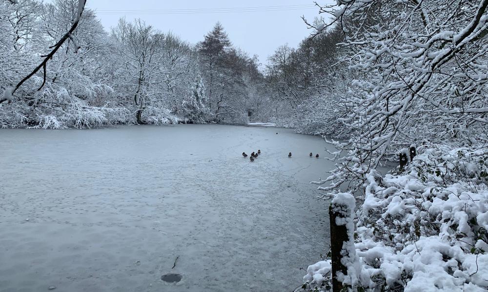 Banner winter 1